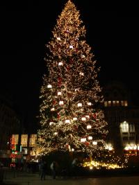 夜のツリー